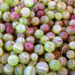 Gooseberries by Cansanity