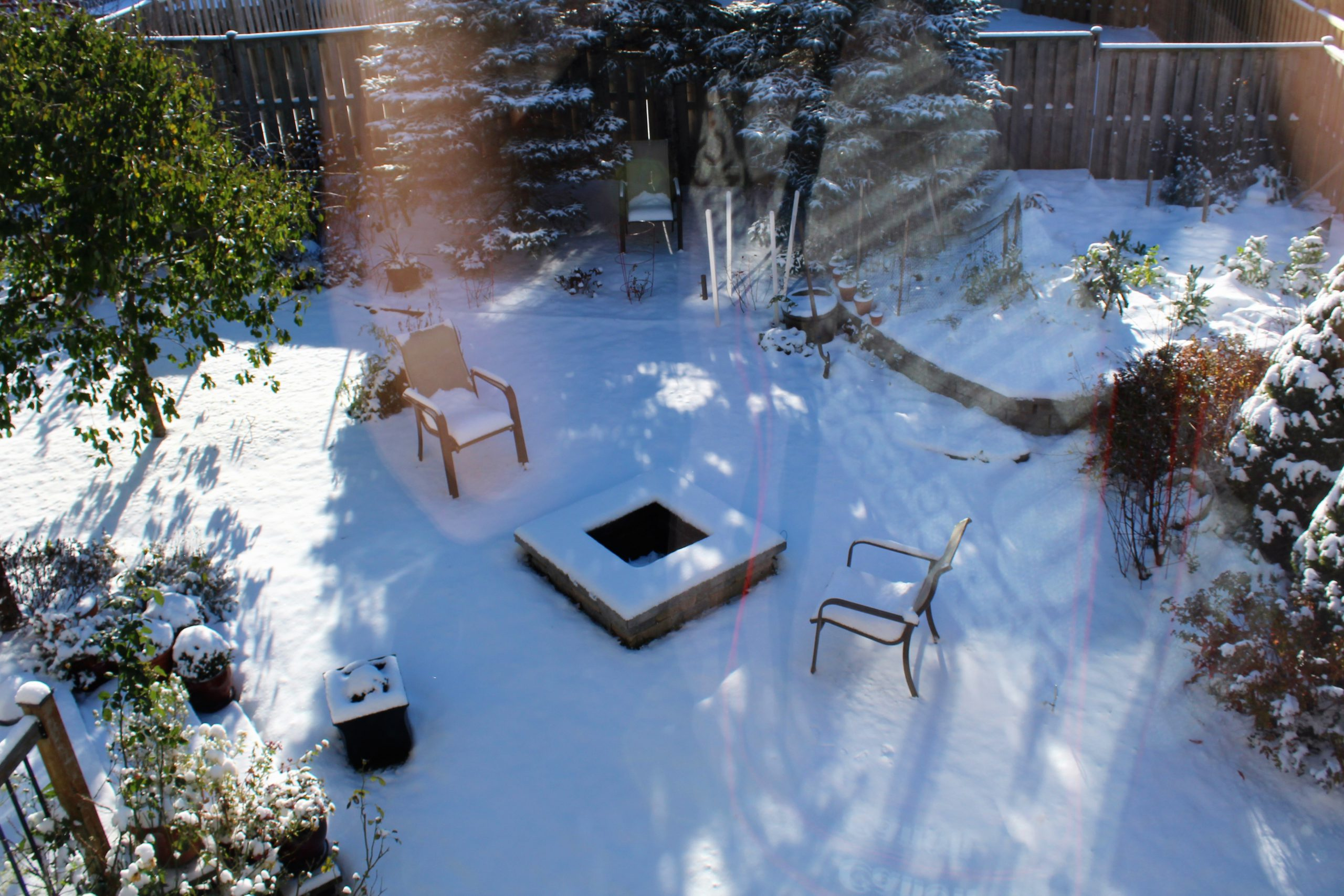 Winter backyard photo